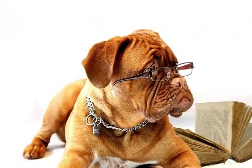 Chien-lunettes.jpg